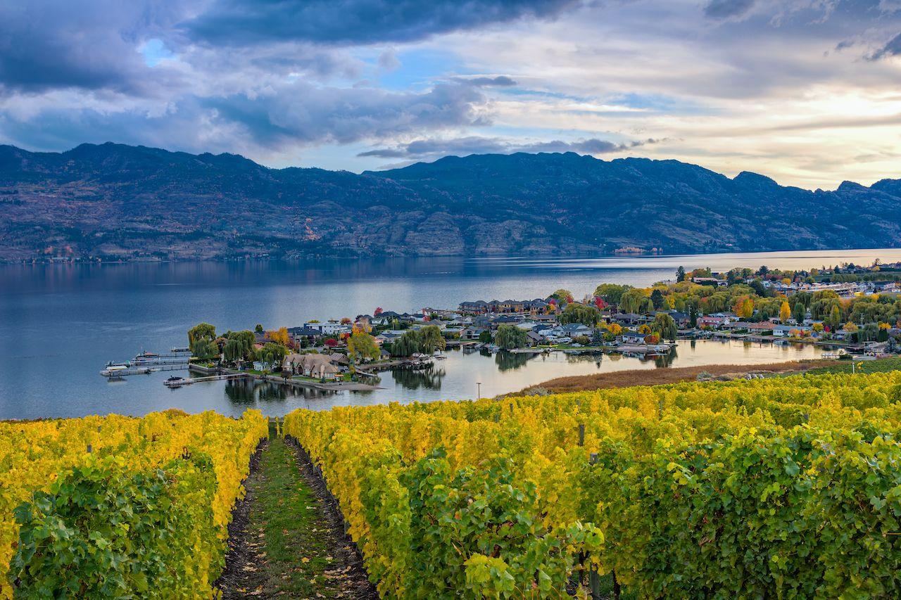 Vineyard overlooking a subdivision in Okanagan, Canada