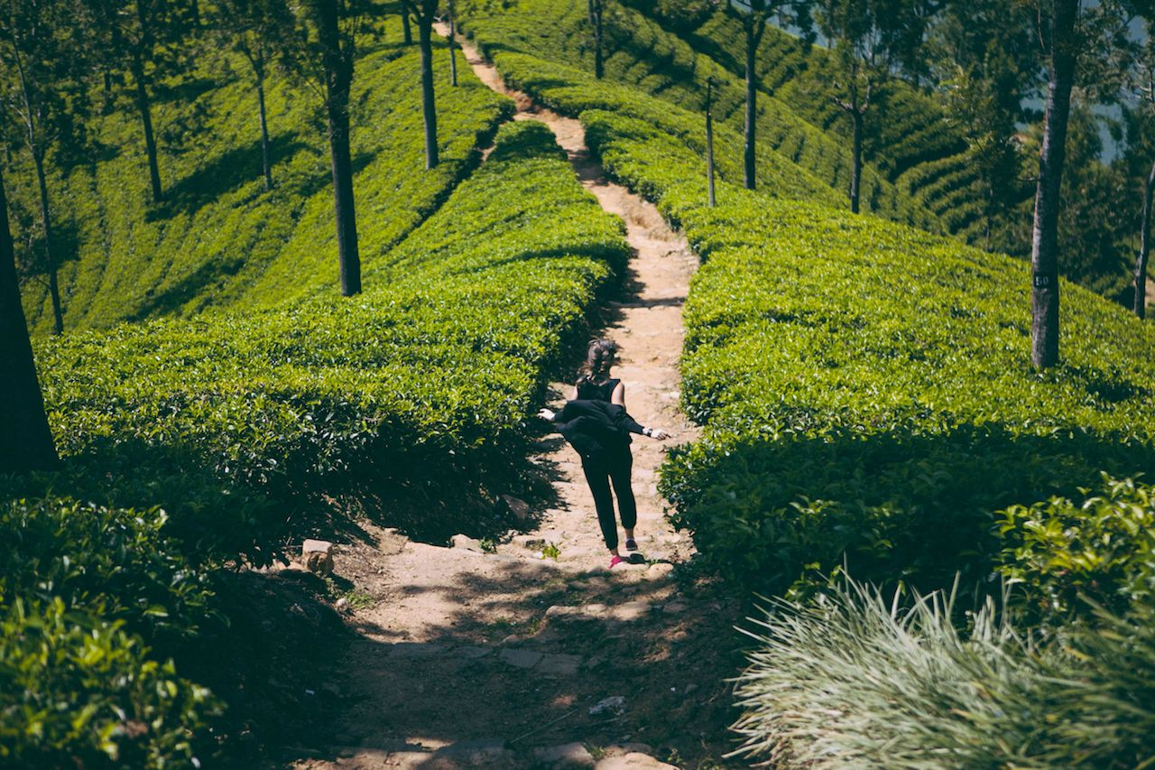 girl runs along the path in tea plantations, beautiful green landscape, Sri Lanka