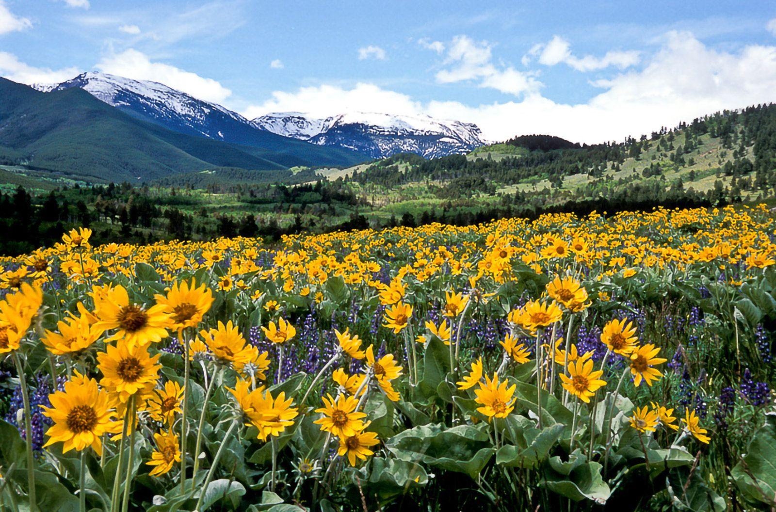 5 Wege die schönsten Seiten von Montana zu entdecken