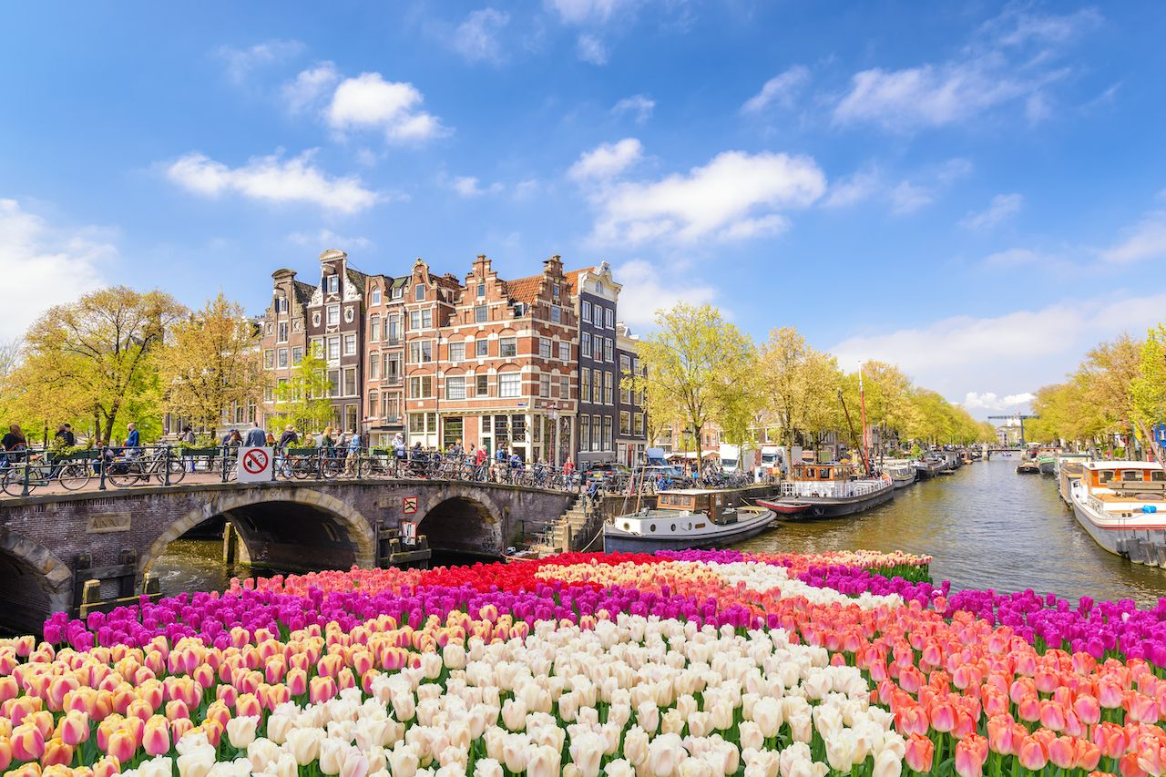 Amsterdam Netherlands, city skyline at canal waterfront with spring tulip flower