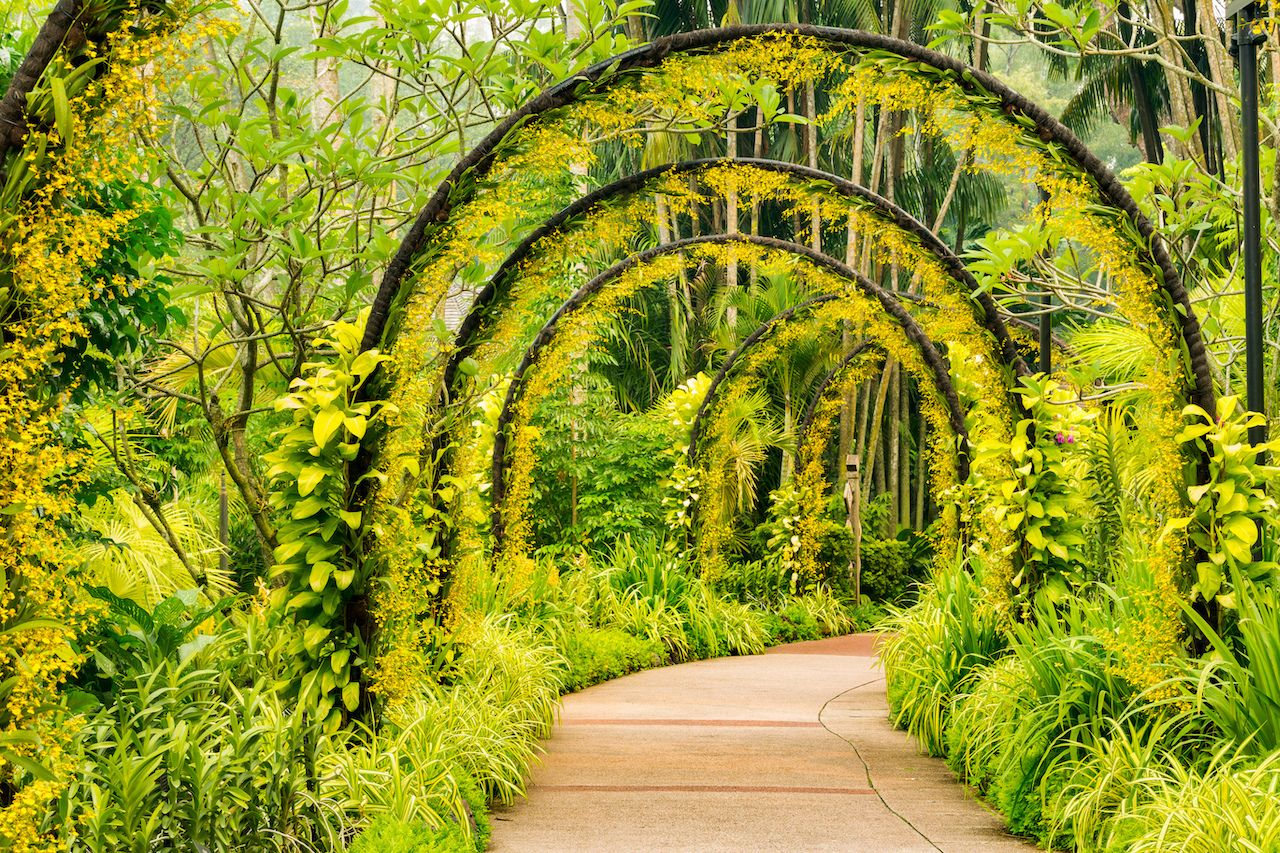 Archway of yellow orchids from Singapore National Orchid Garden