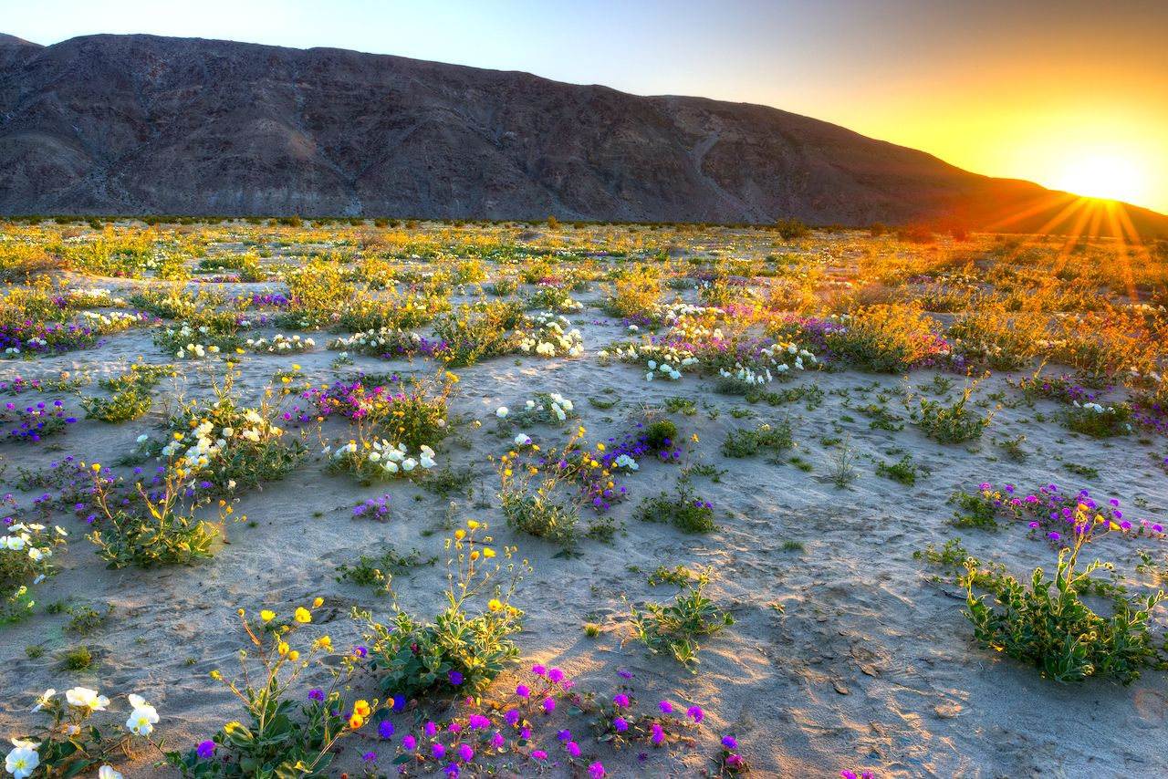 California to experience super bloom
