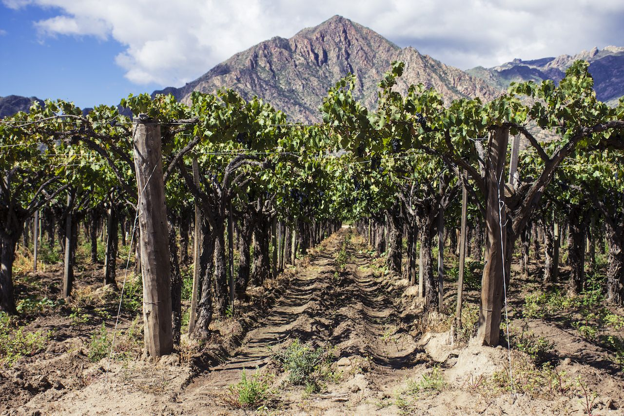 El Cafayate vineyards with mountain backdrop, Argentina