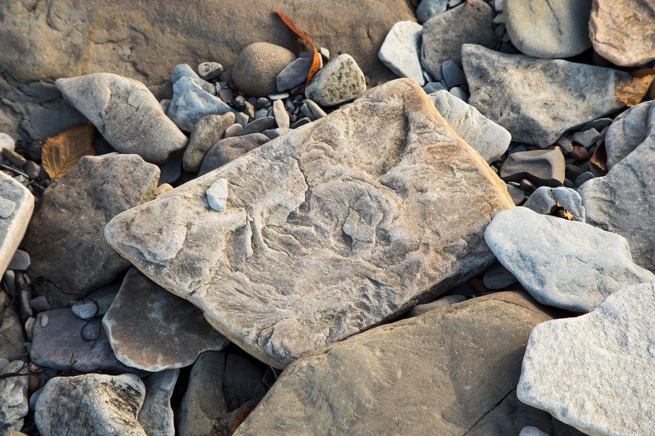 Fossilized stone at World Heritage SIte Joggins Fossil Cliffs, Nova Scotia, Canada