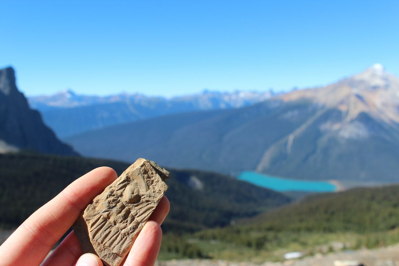 Hand holding a up of a trilobite fossil in a rock, at the Burgess Shale in the Rocky Mountains