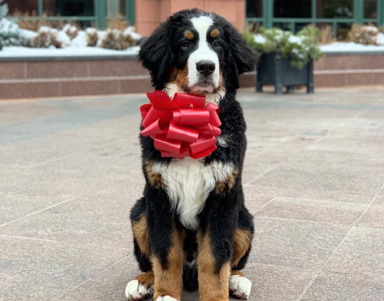 New dog mascot for Aspen hotel