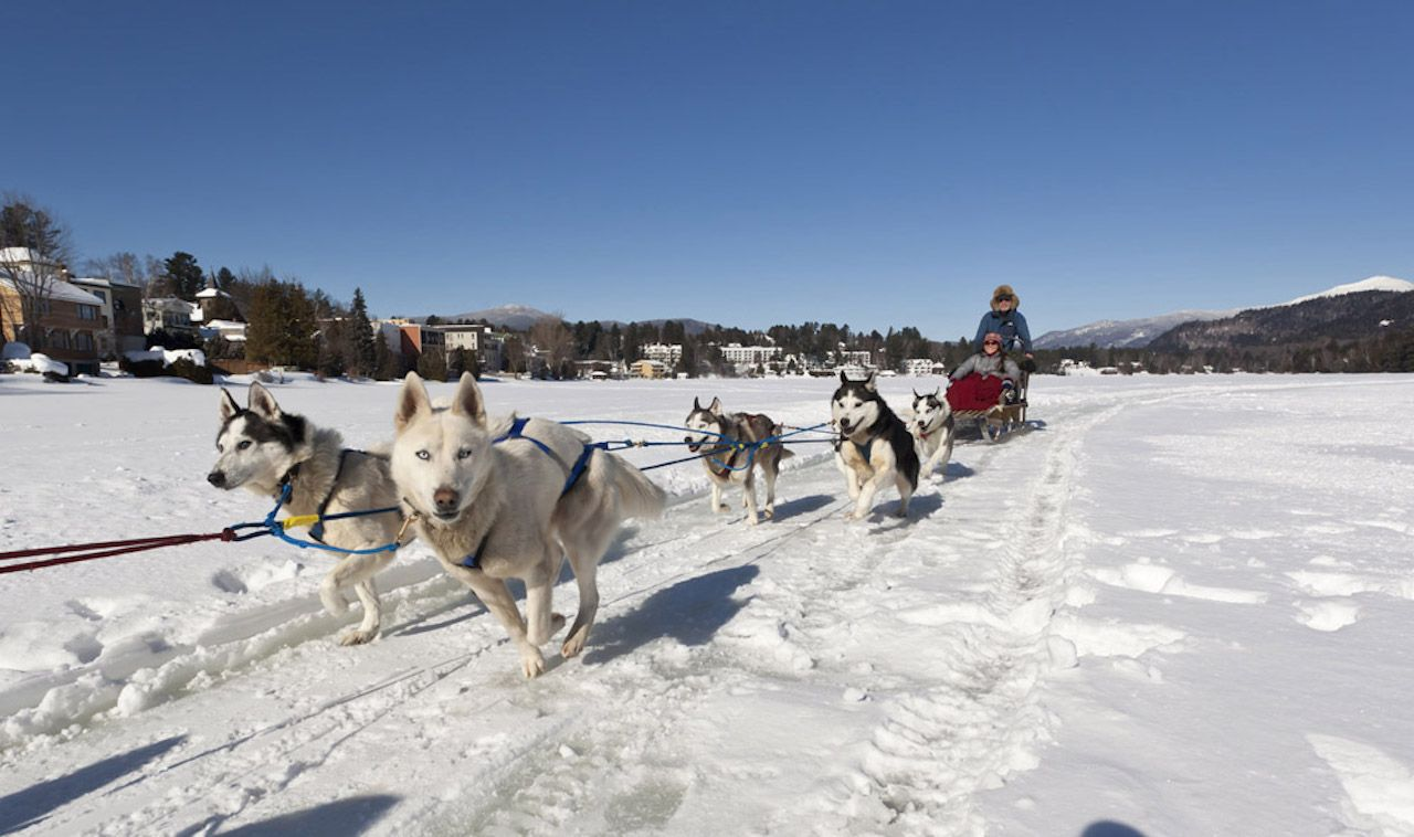 Lake Placid dog sledding