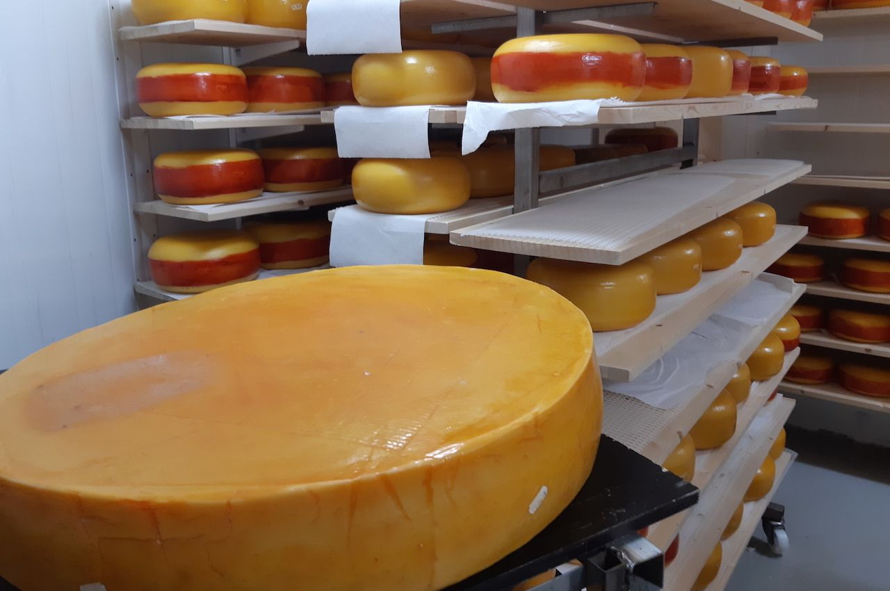Large wheen of aged Fanaost cheese with smaller wheels in the background
