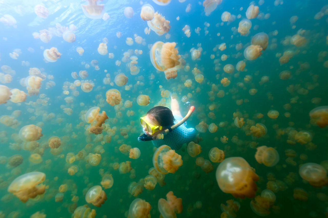 Jellyfish Lake in Palau open again