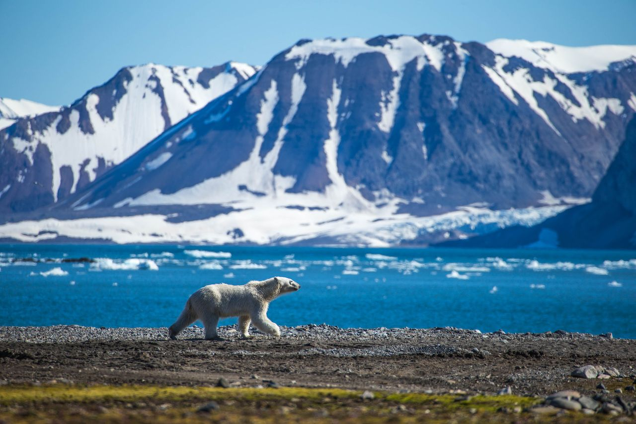 Best things to do in Svalbard