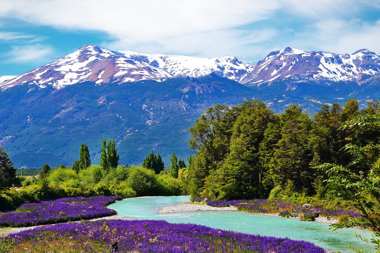 Purple flowers and mountain in Patagonia, Chile