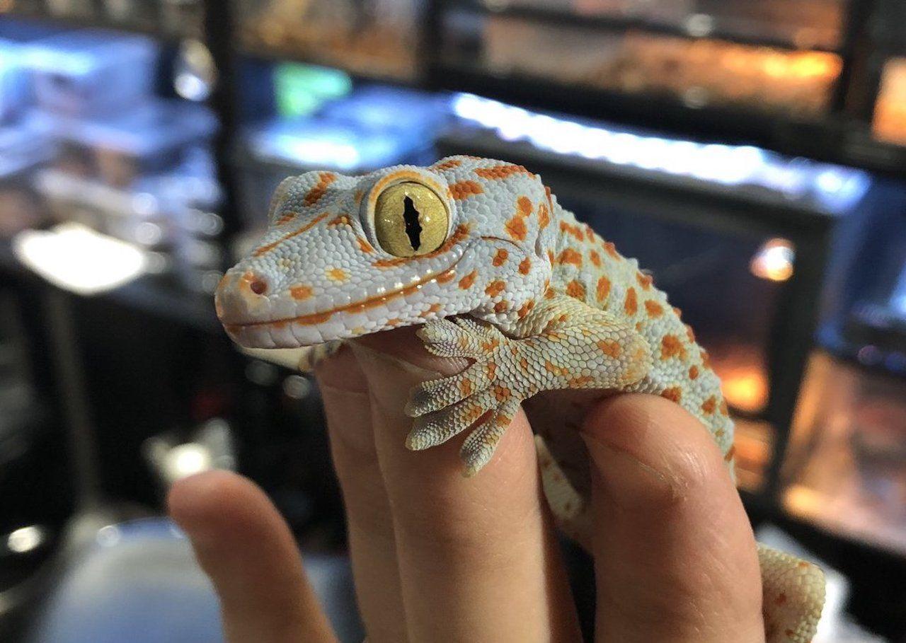 Reptile bar in Tokyo
