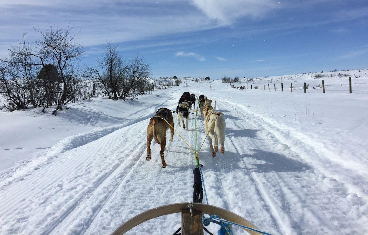 dog sled tour Idaho winter