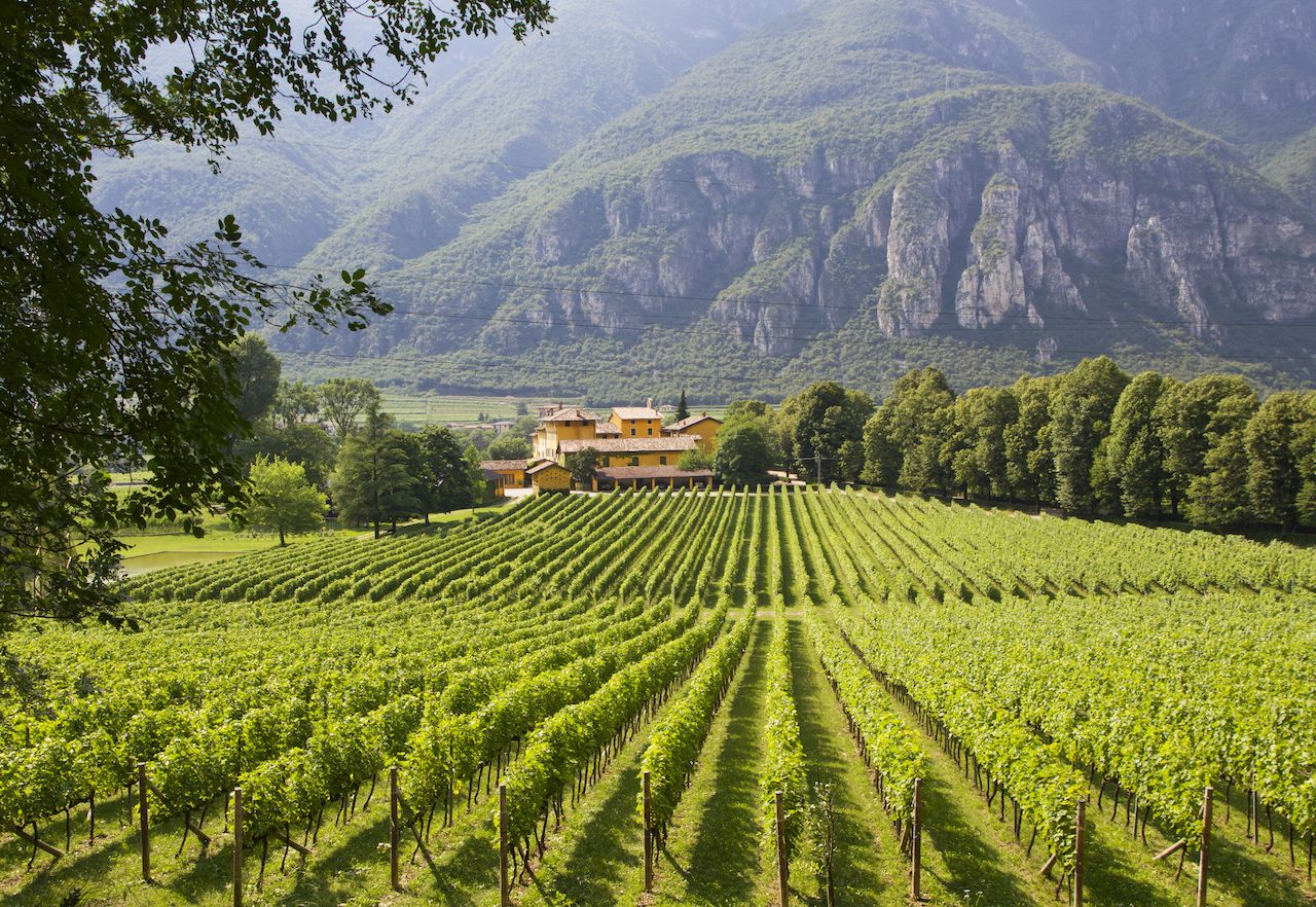 A winery in Trento