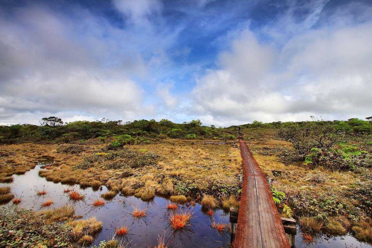 Alakai Marsh trail in Kauai Island, Hawaii