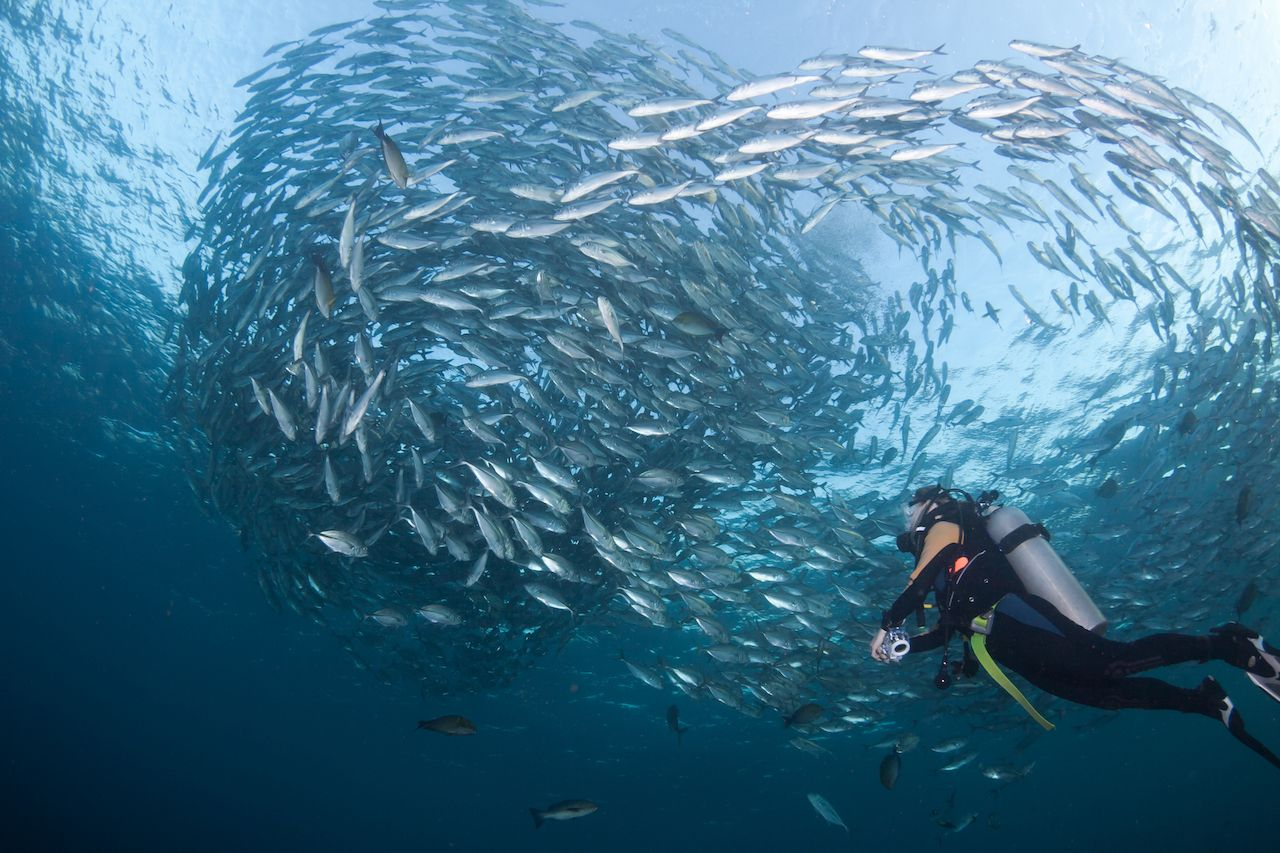Diver watching a huge school of fish in Bali