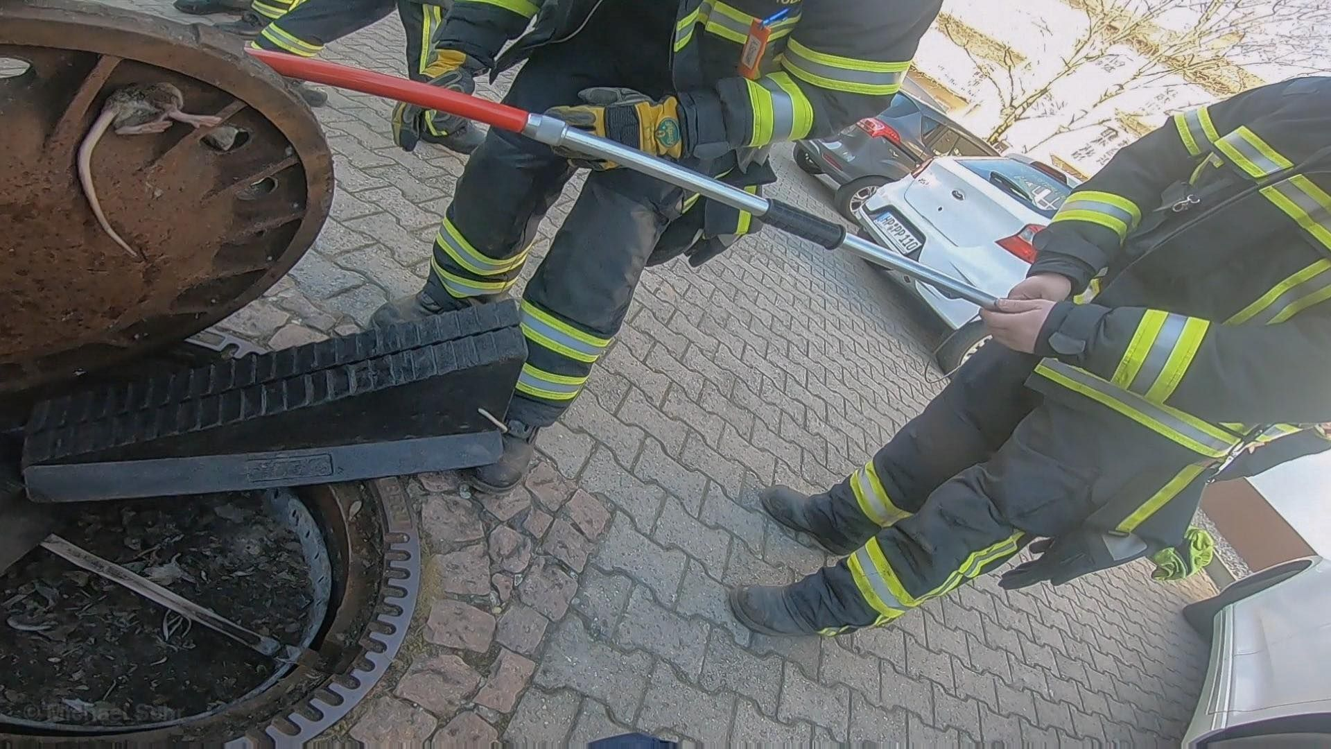 Firefighters helping fat rat stuck in manhole in Germany