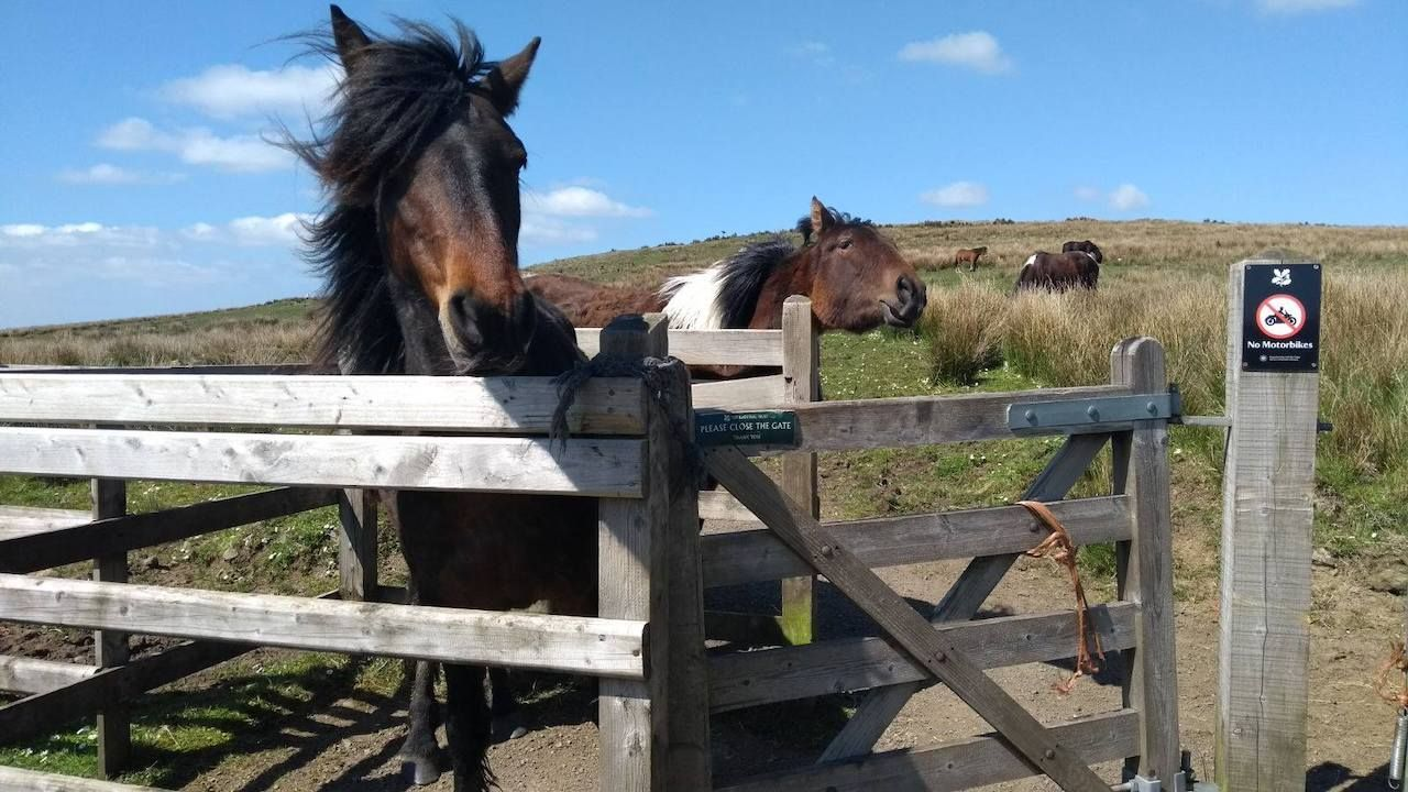 Horses around Divis and the Black Mountain, Belfast