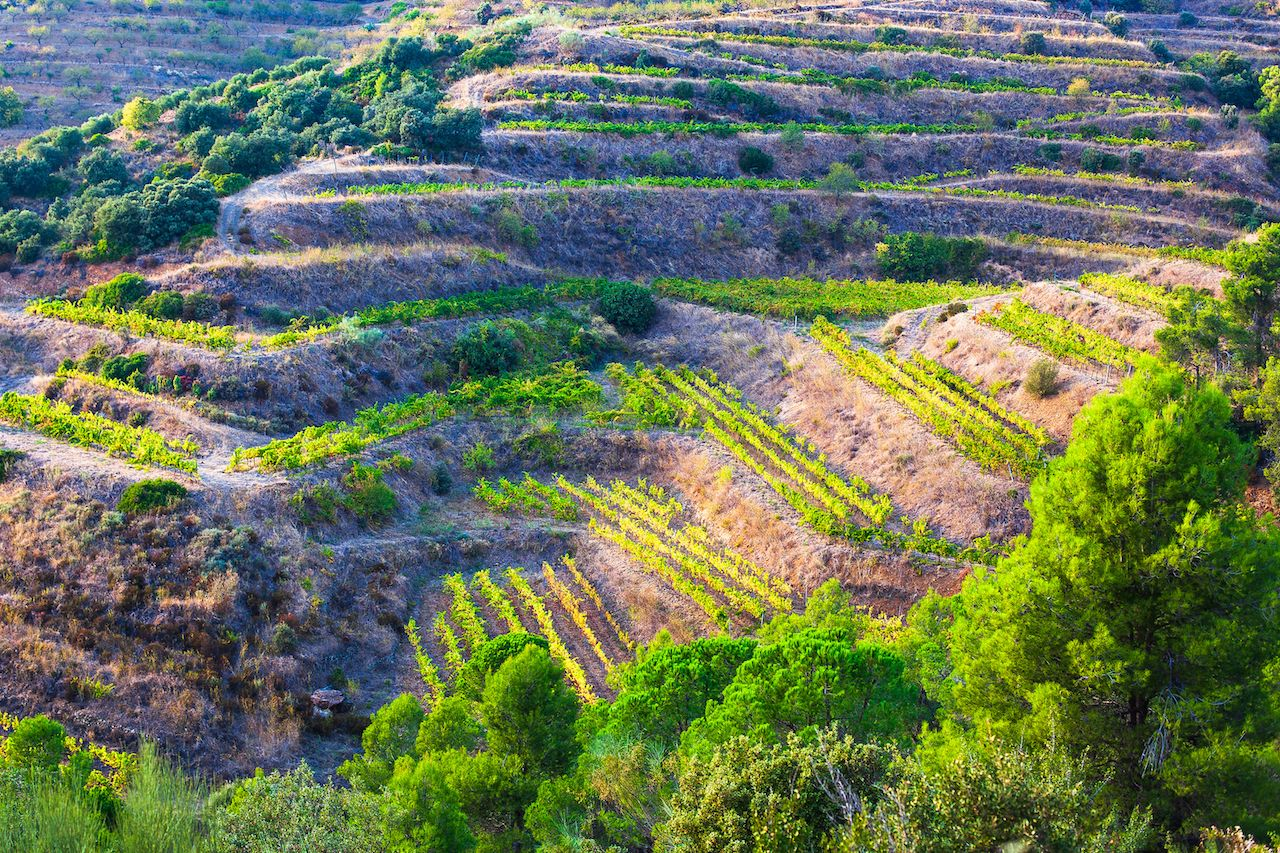 Priorat Wine Region of Spain