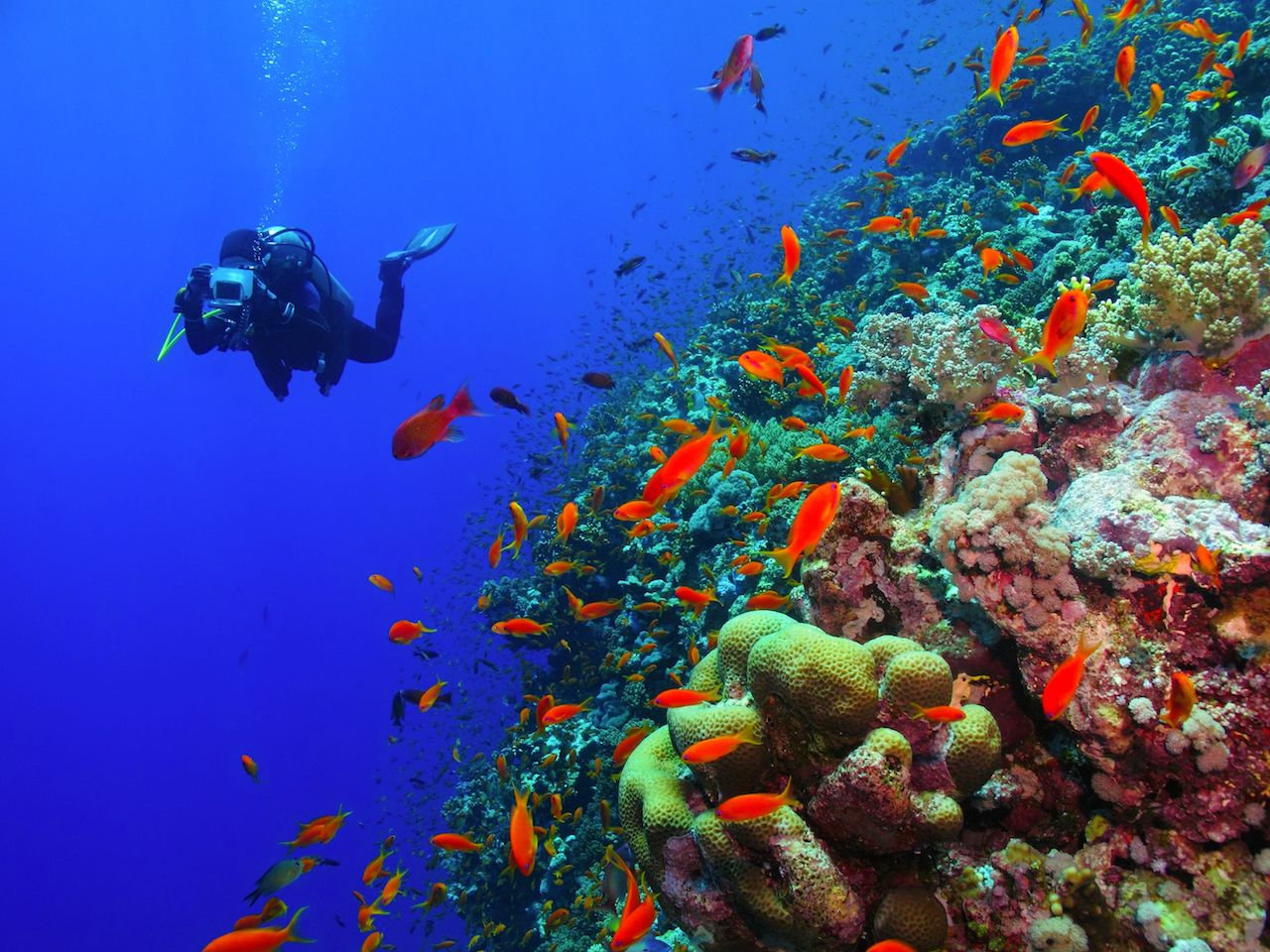 Scuba diver photographer swimming in the blue ocean with colorful coral reef