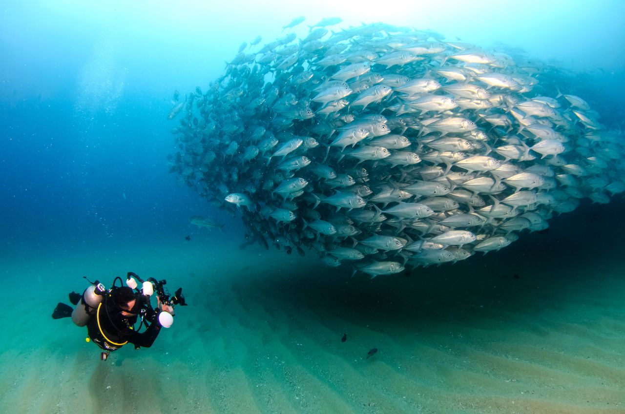Scuba sites in Baja California