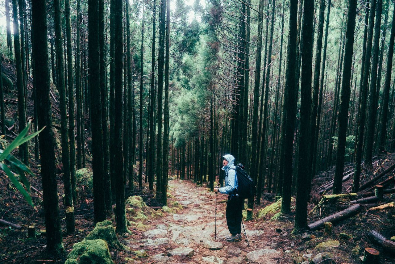 Shinrin-yoku, forest bathing in Japan