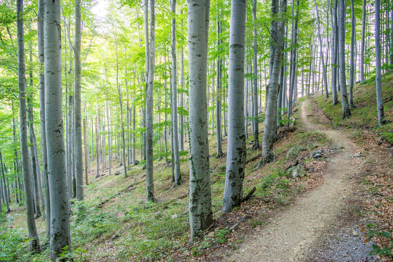 Trail through Forest on Slopes of Medvednica Mountain
