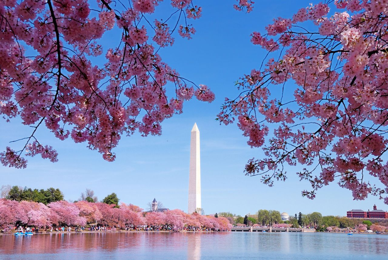 Washington DC Cherry Blossom with Lake and Washington Monument