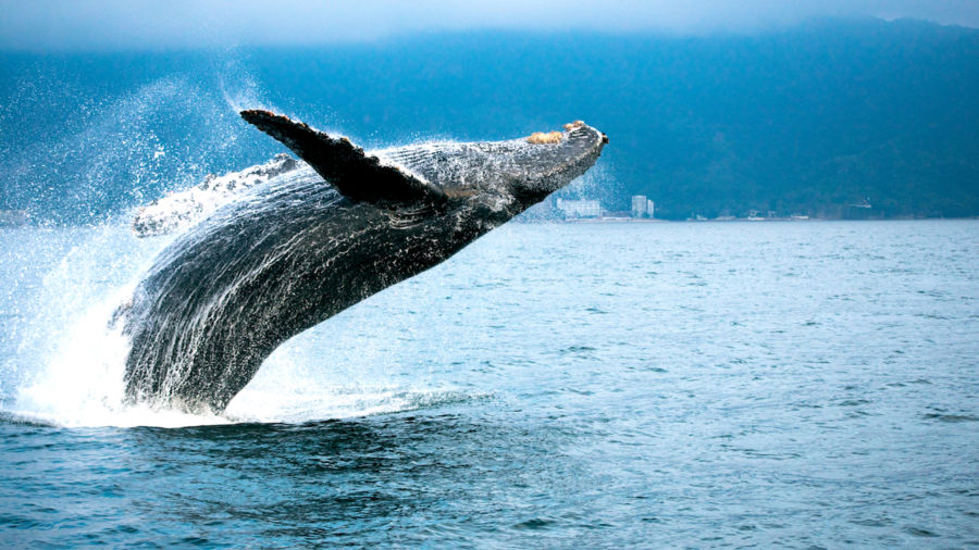 10 hotels that are perfect for whale watching this spring