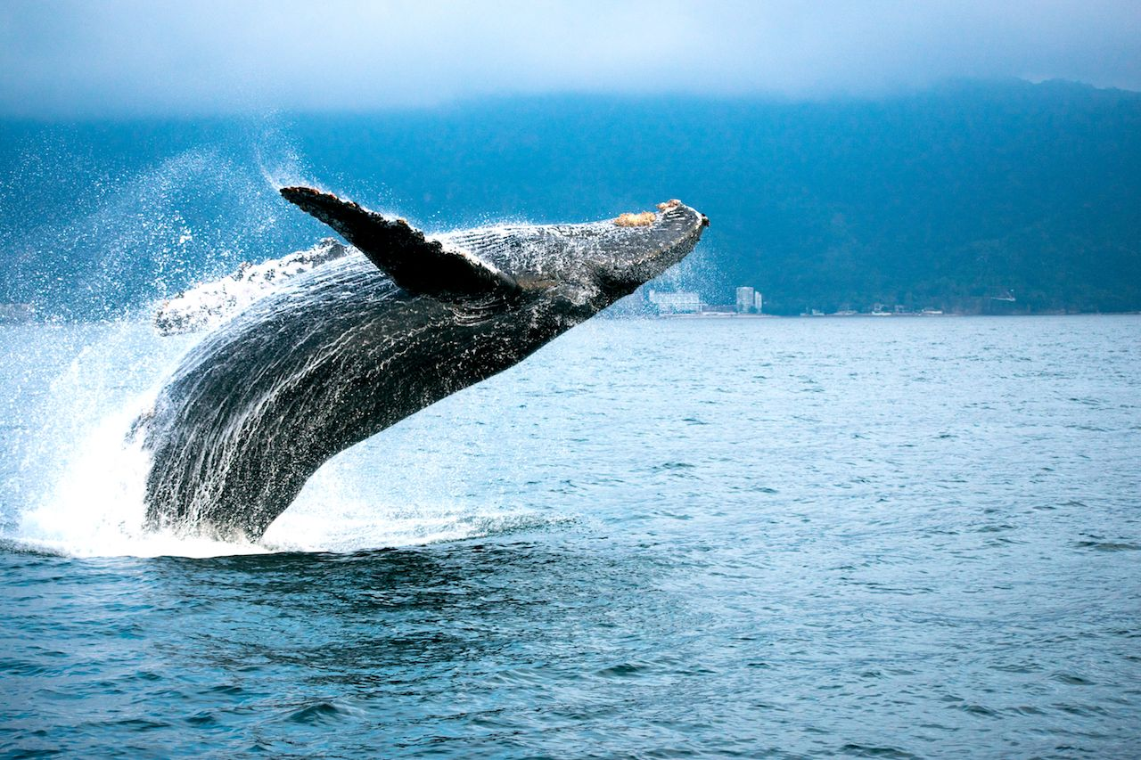 Best hotels for whale watching