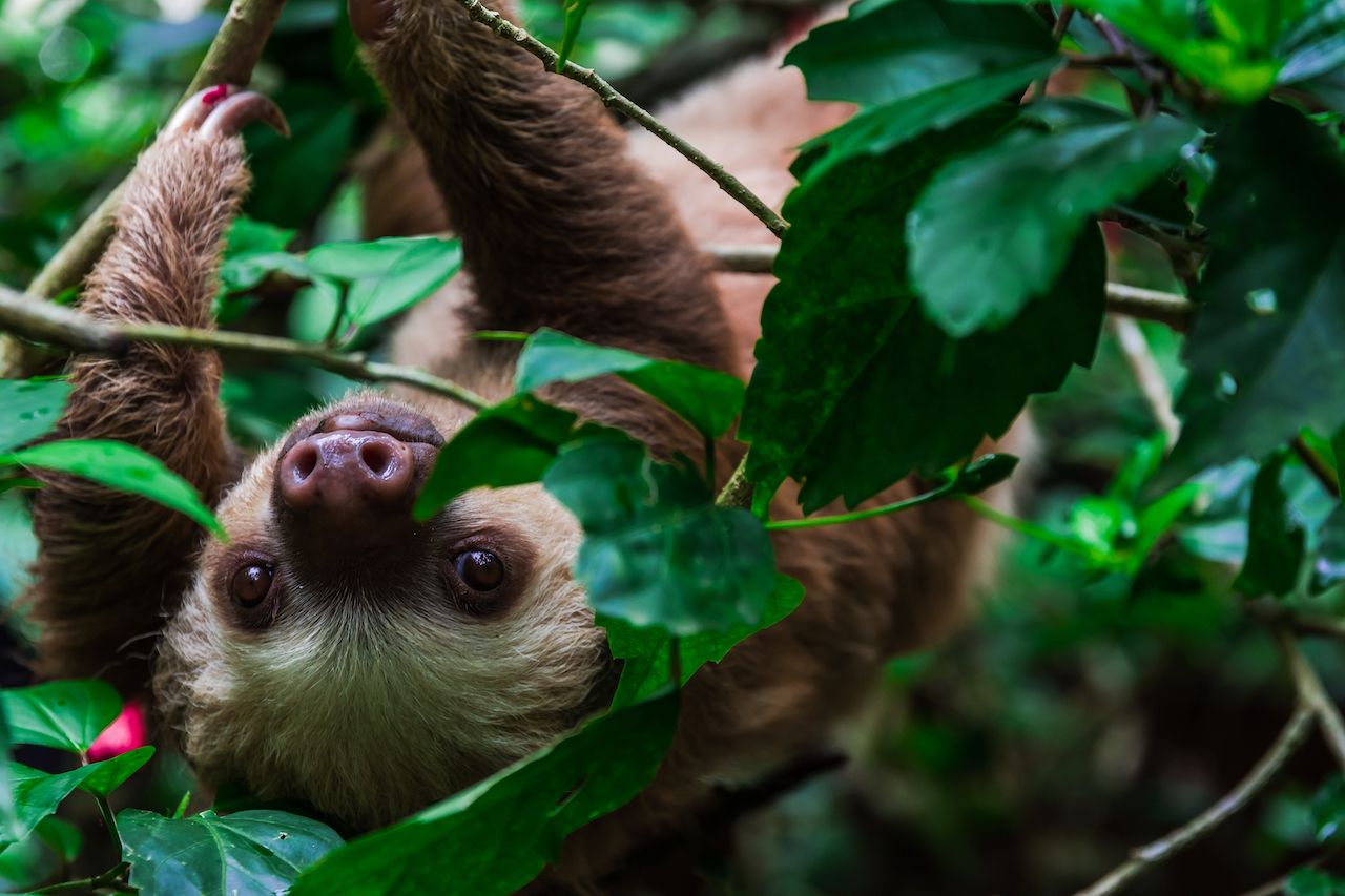 Retirement home for sloths in Wales