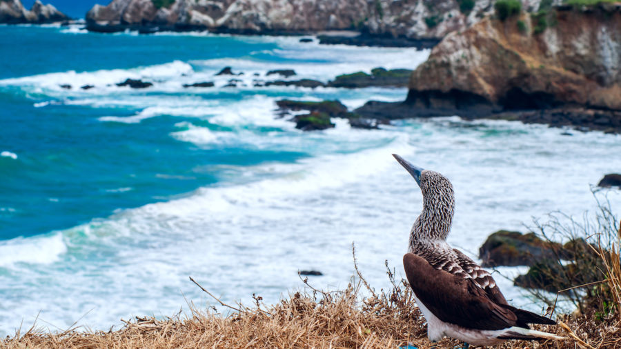 The 'poor man's Galapagos' is actually an incredible, affordable alternative
