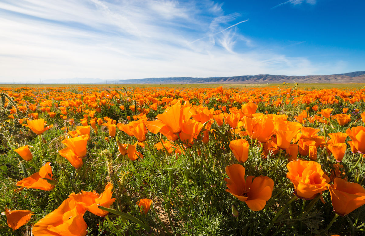 Best flower fields in the United States