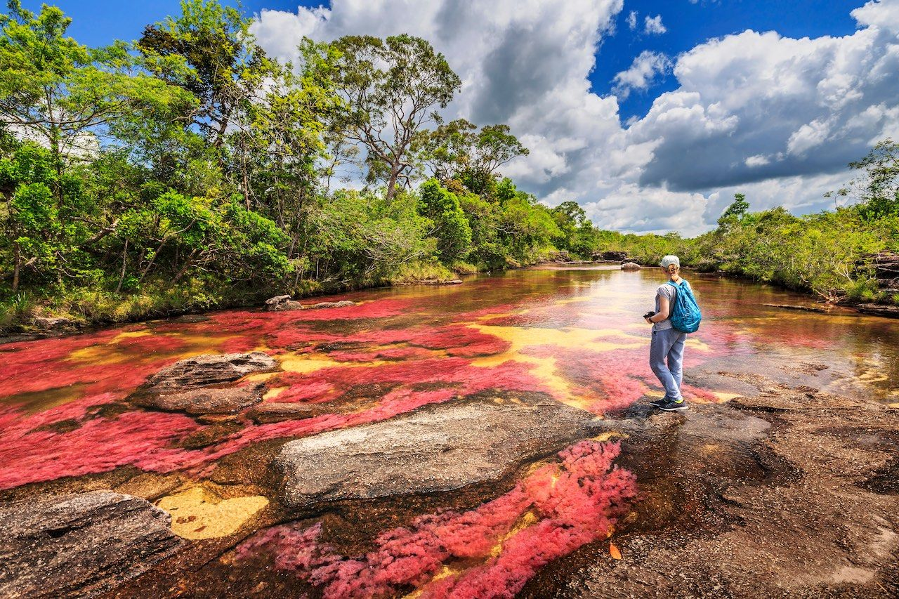 Cano Cristales River of Five Colors Colombia landscape