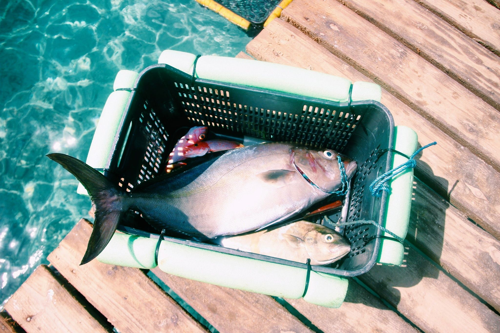 Catch of the day at the snorkeling beach