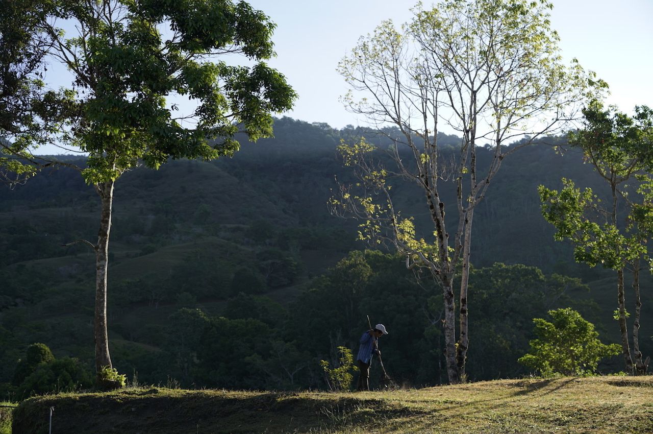 Coffee plantation and worker