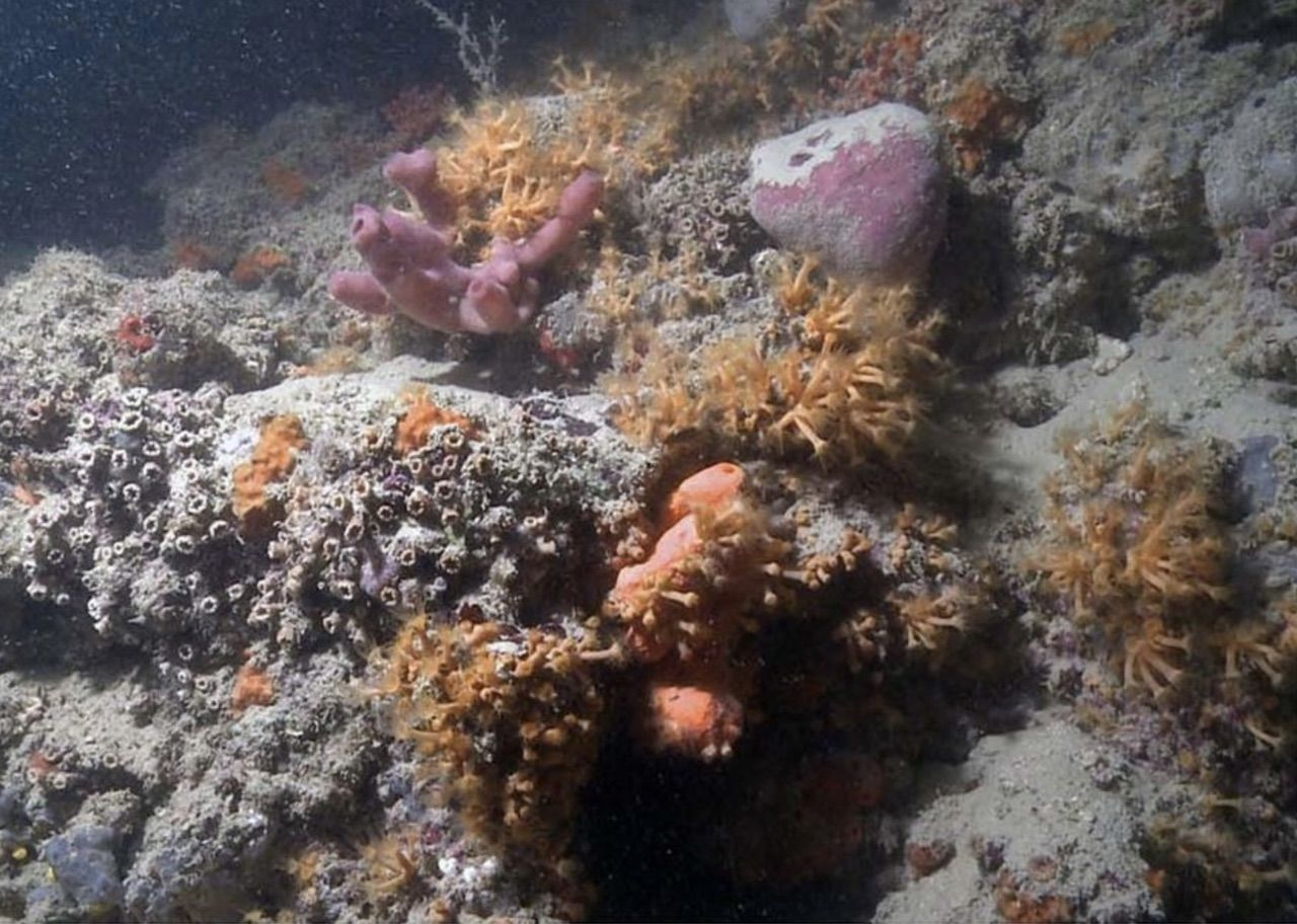 Coral reef found in Italy