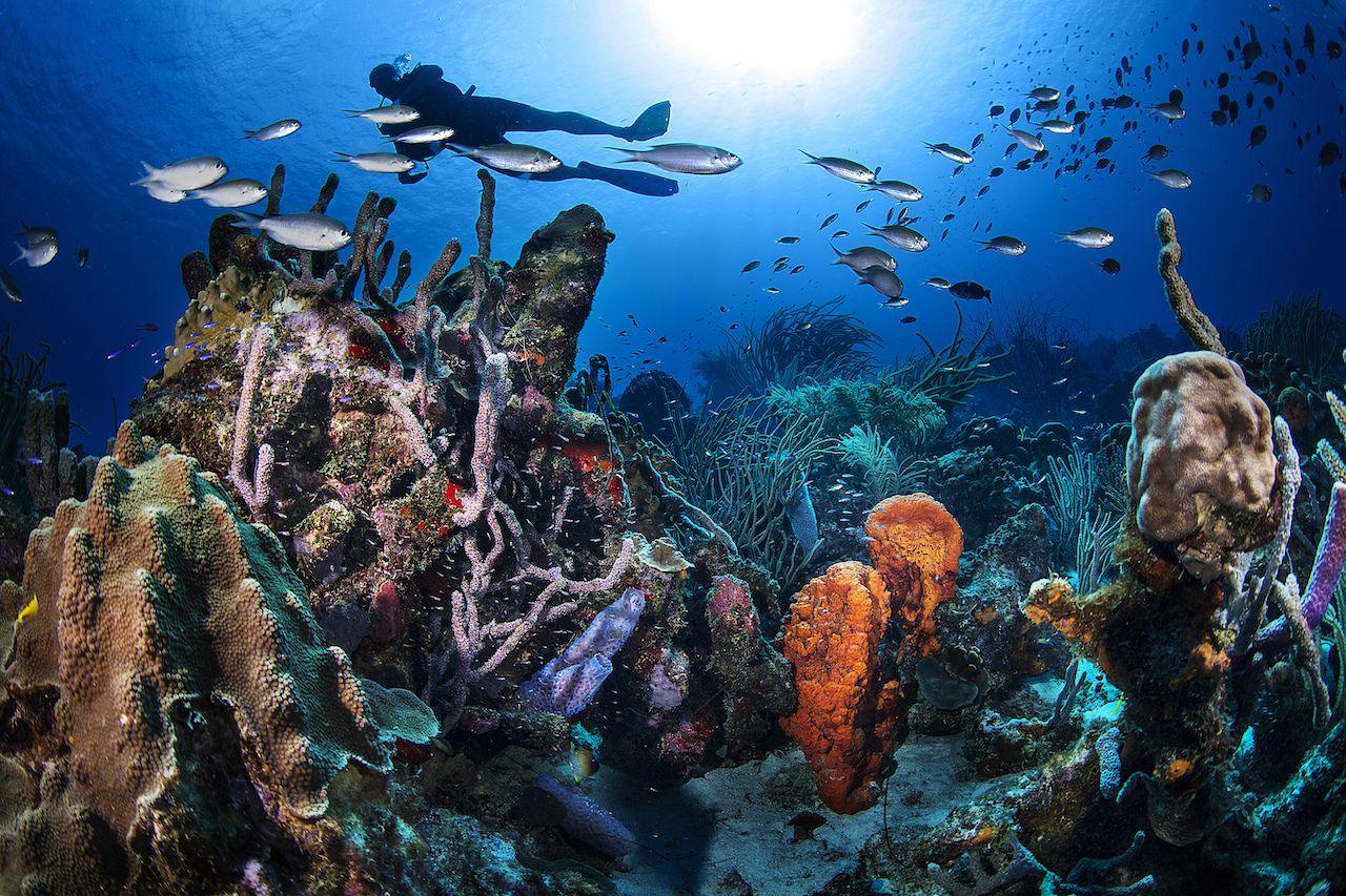 Curacao Underwater Landscape