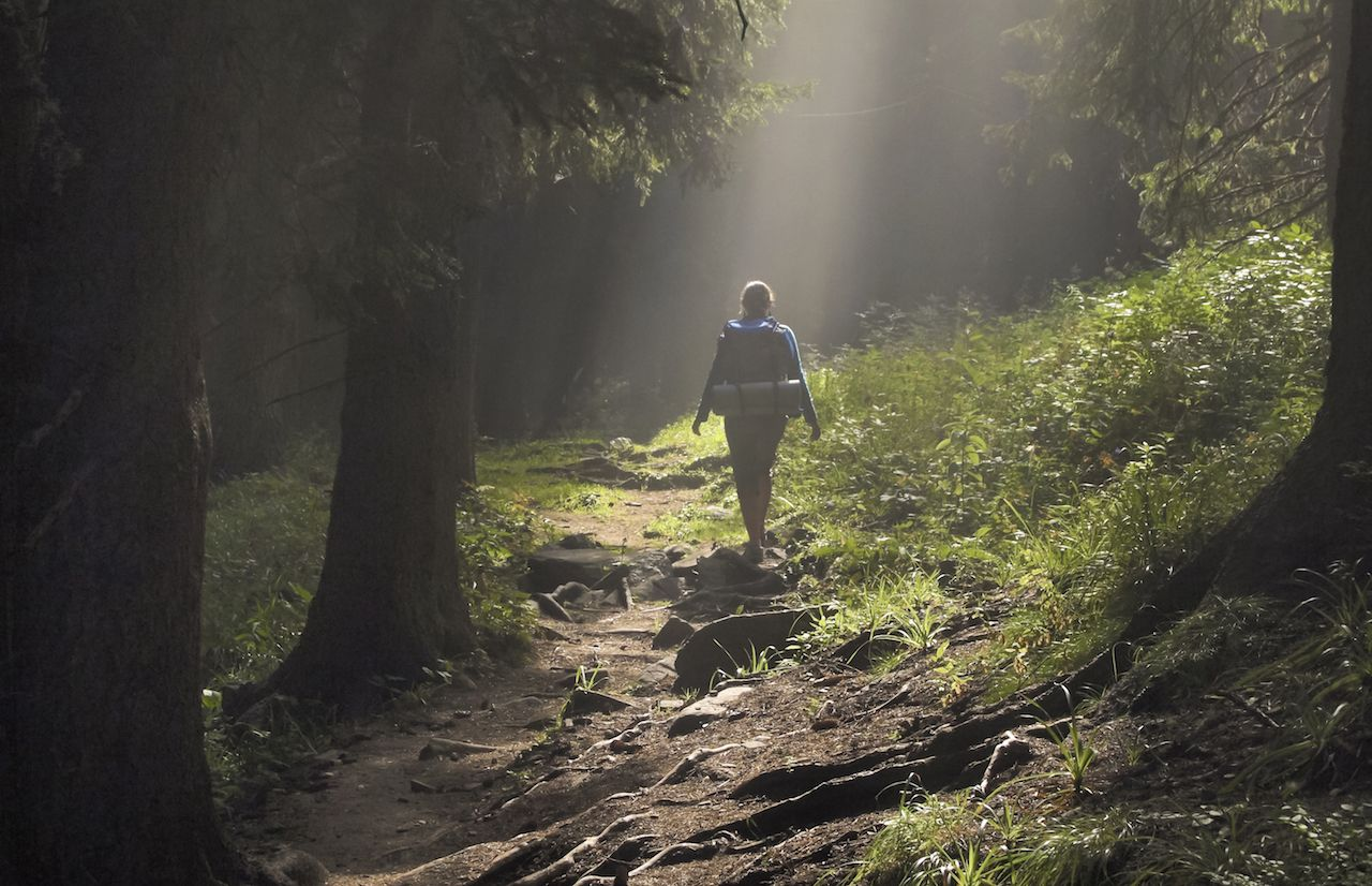 Female hiker walking under the rays of morning sun in the mountain forest