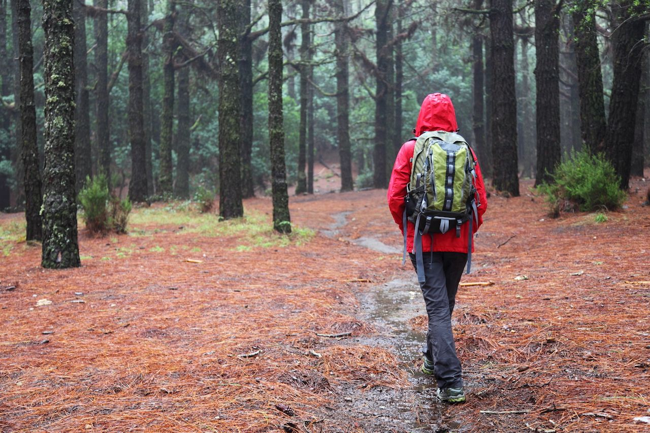 Hiker walking on forest pine path on rainy day wearing raincoat