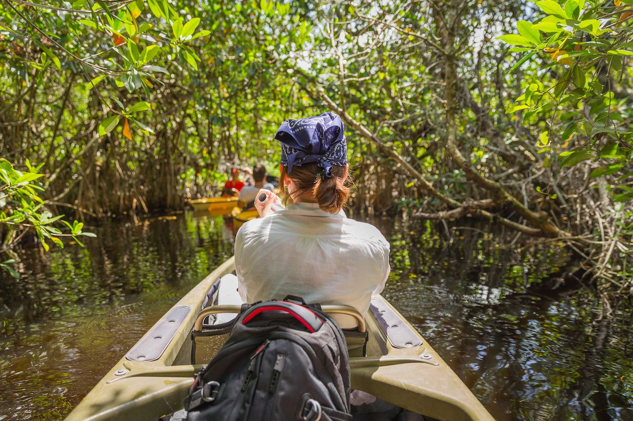 Kayaking through the Everglades, Florida