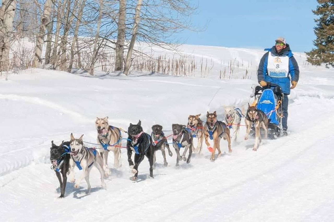 Sled dogs with musher