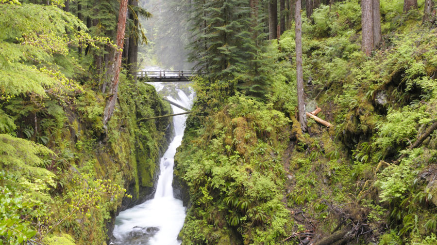 5 gorgeous trails not to miss in Olympic National Park