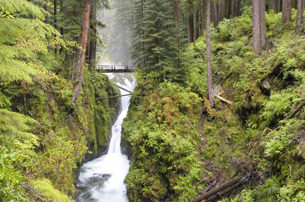 Best Olympic National Park trails