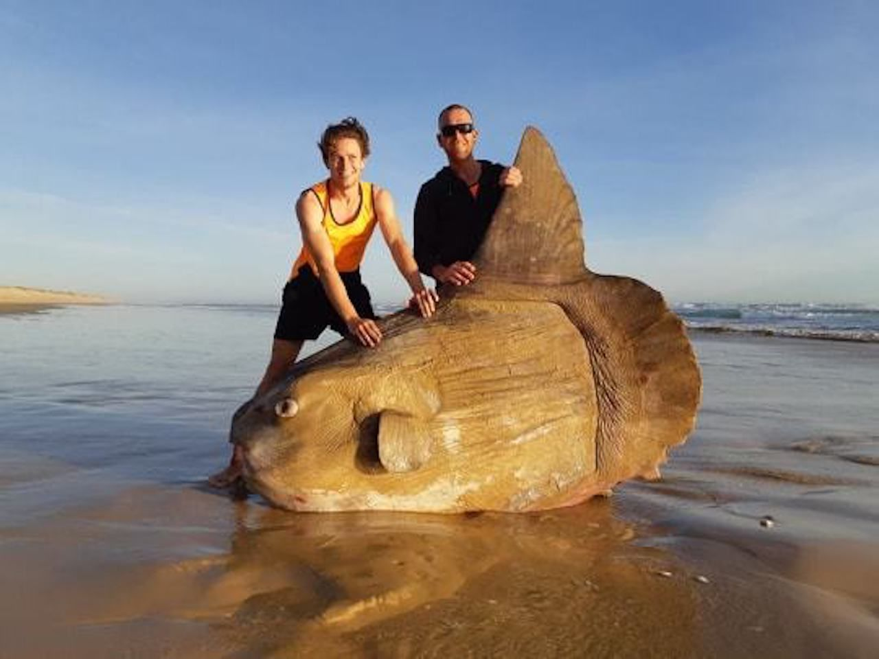 Huge sunfish washes up in Australia