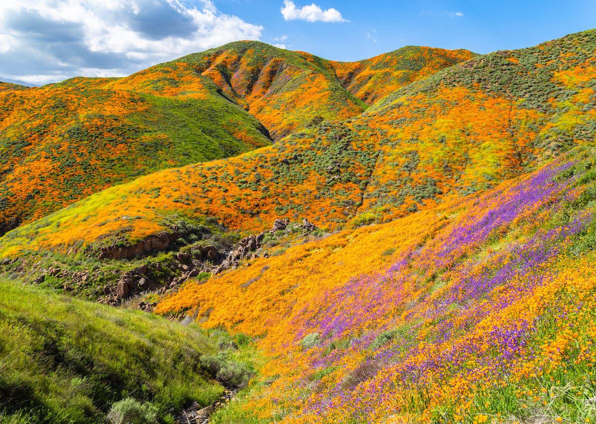 Super bloom mayhem in California overwhelms small town
