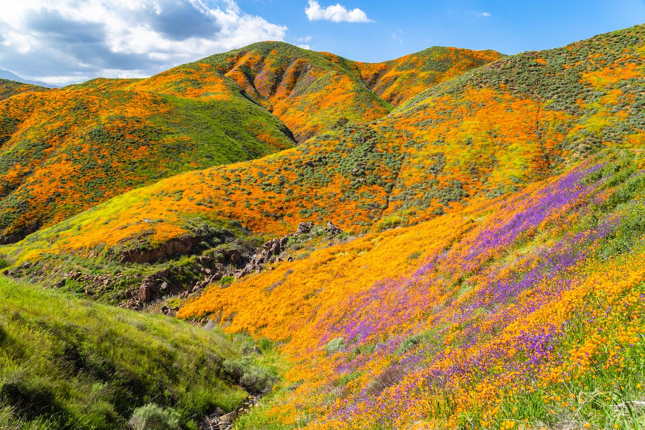 Super bloom chaos in California