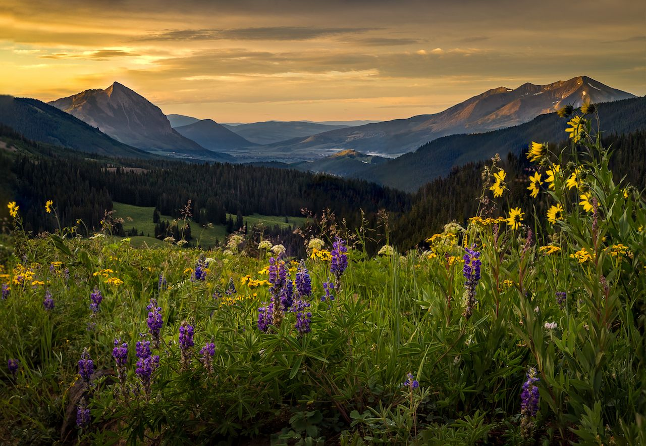 Wildflower field above Crested Butte at sunrise