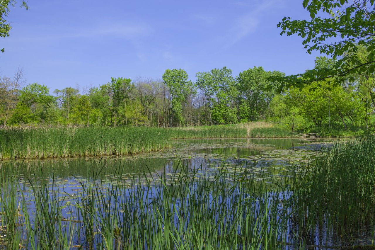 A beautiful view of a pond with reflections and marshy area with trees, grasses and lily pads at a Nature Center in Chicago