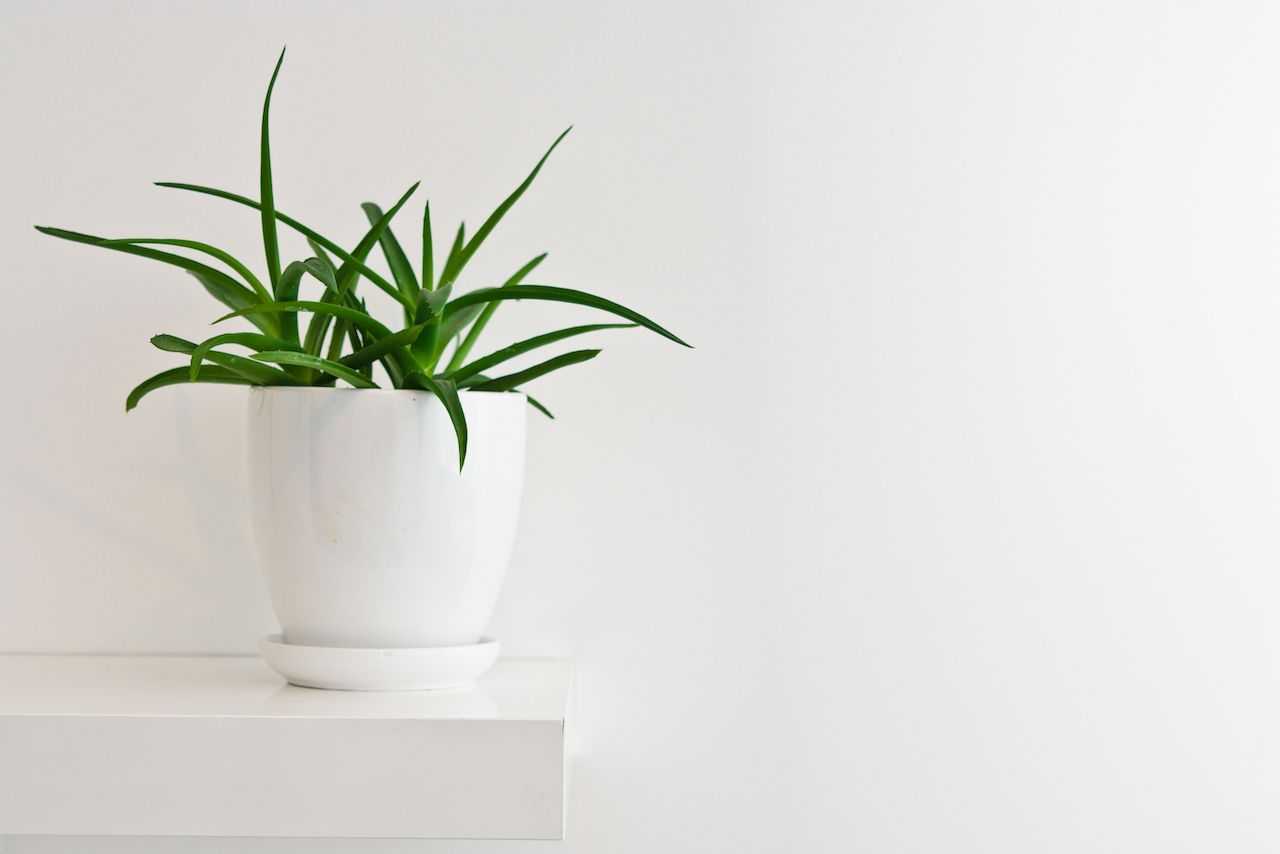 How to keep houseplants alive when you travel